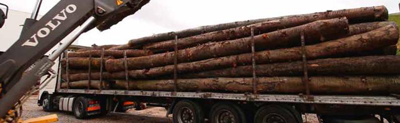 uís Madeiras - Excelência em madeira